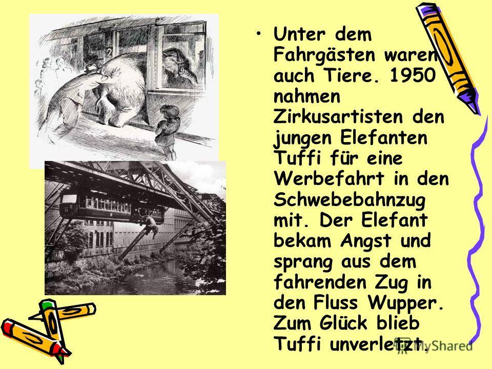 Unter dem Fahrgästen waren auch Tiere. 1950 nahmen Zirkusartisten den jungen Elefanten Tuffi für eine Werbefahrt in den Schwebebahnzug mit. Der Elefant bekam Angst und sprang aus dem fahrenden Zug in den Fluss Wupper. Zum Glück blieb Tuffi unverletzt