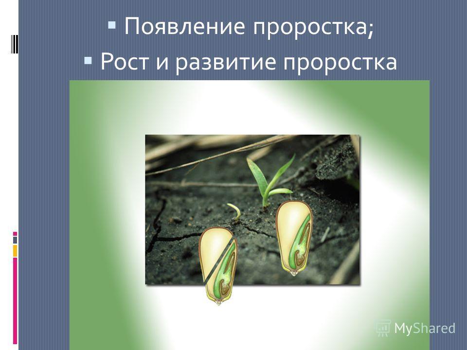 Появление проростка; Рост и развитие проростка