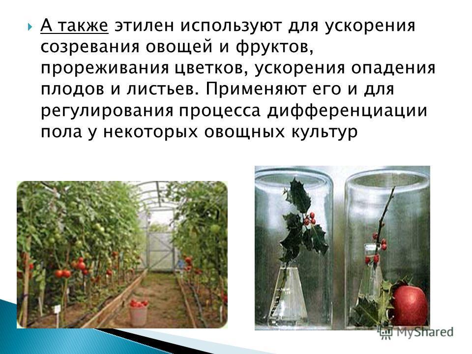 А также этилен используют для ускорения созревания овощей и фруктов, прореживания цветков, ускорения опадения плодов и листьев. Применяют его и для регулирования процесса дифференциации пола у некоторых овощных культур