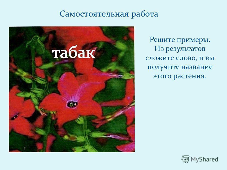 Самостоятельная работа Решите примеры. Из результатов сложите слово, и вы получите название этого растения.