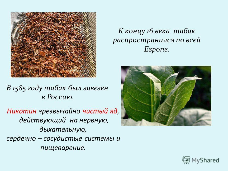 К концу 16 века табак распространился по всей Европе. В 1585 году табак был завезен в Россию. Никотин чрезвычайно чистый яд, действующий на нервную, дыхательную, сердечно – сосудистые системы и пищеварение.