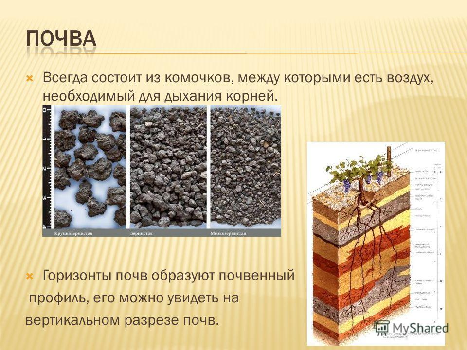 Всегда состоит из комочков, между которыми есть воздух, необходимый для дыхания корней. Горизонты почв образуют почвенный профиль, его можно увидеть на вертикальном разрезе почв.
