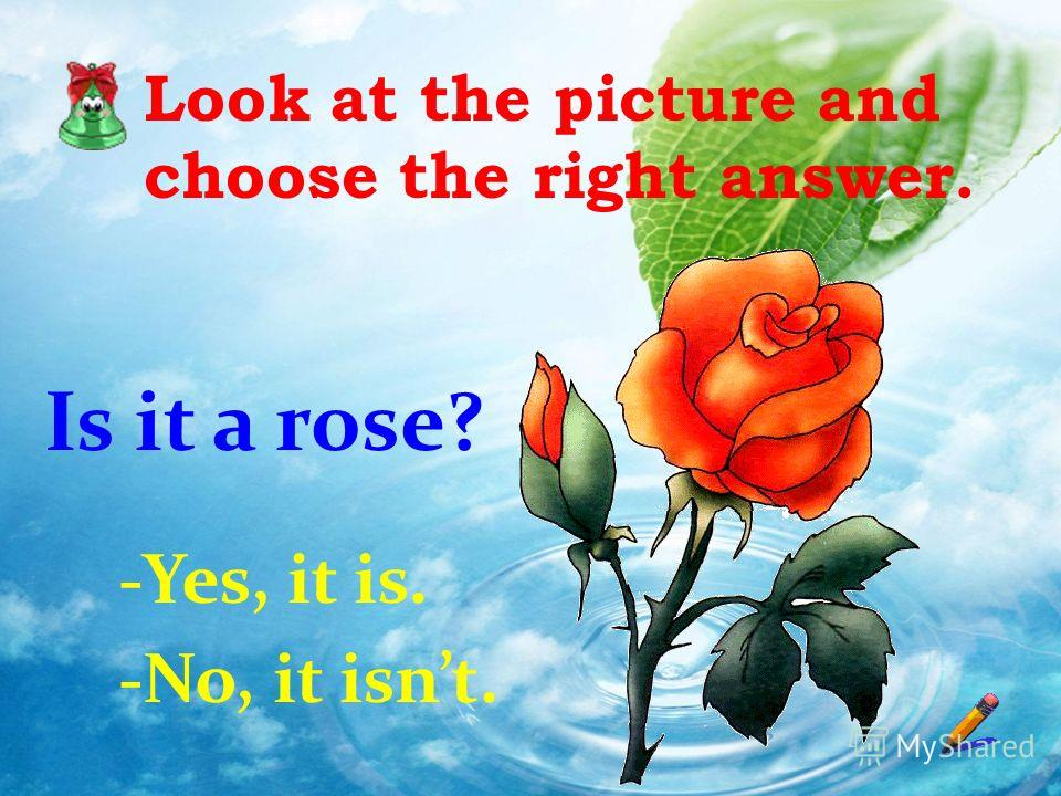 Look at the picture and choose the right answer. Is it a rose? -Yes, it is. -No, it isnt.