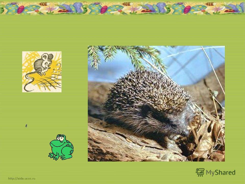 Серый недотрога Живёт в глуши лесной. Иголок очень много, А нитки – ни одной!