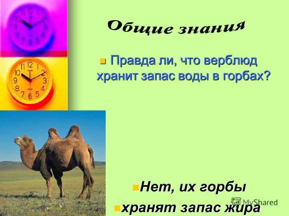 Правда ли, что верблюд хранит запас воды в горбах? Правда ли, что верблюд хранит запас воды в горбах? Нет, их горбы Нет, их горбы хранят запас жира хранят запас жира