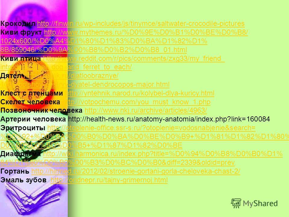 Крокодил http://finwin.ru/wp-includes/js/tinymce/saltwater-crocodile-pictureshttp://finwin.ru/wp-includes/js/tinymce/saltwater-crocodile-pictures Киви фрукт http://www.mythemes.ru/%D0%9E%D0%B1%D0%BE%D0%B8/http://www.mythemes.ru/%D0%9E%D0%B1%D0%BE%D0%