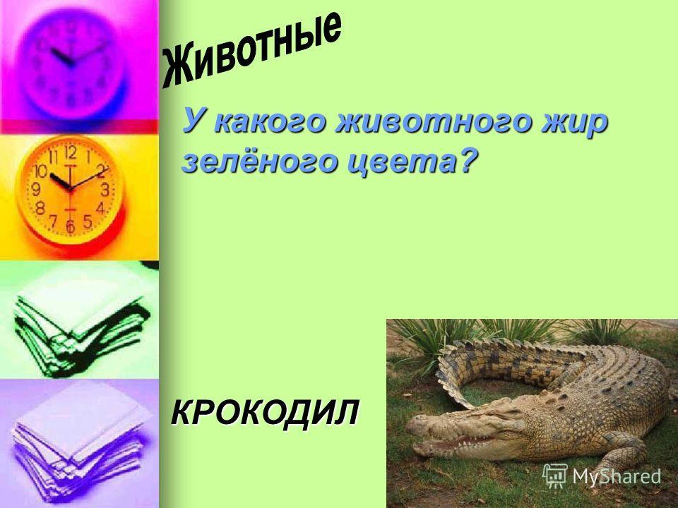 У какого животного жир зелёного цвета? КРОКОДИЛ