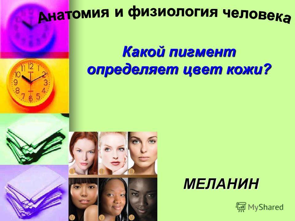 Какой пигмент определяет цвет кожи? МЕЛАНИН