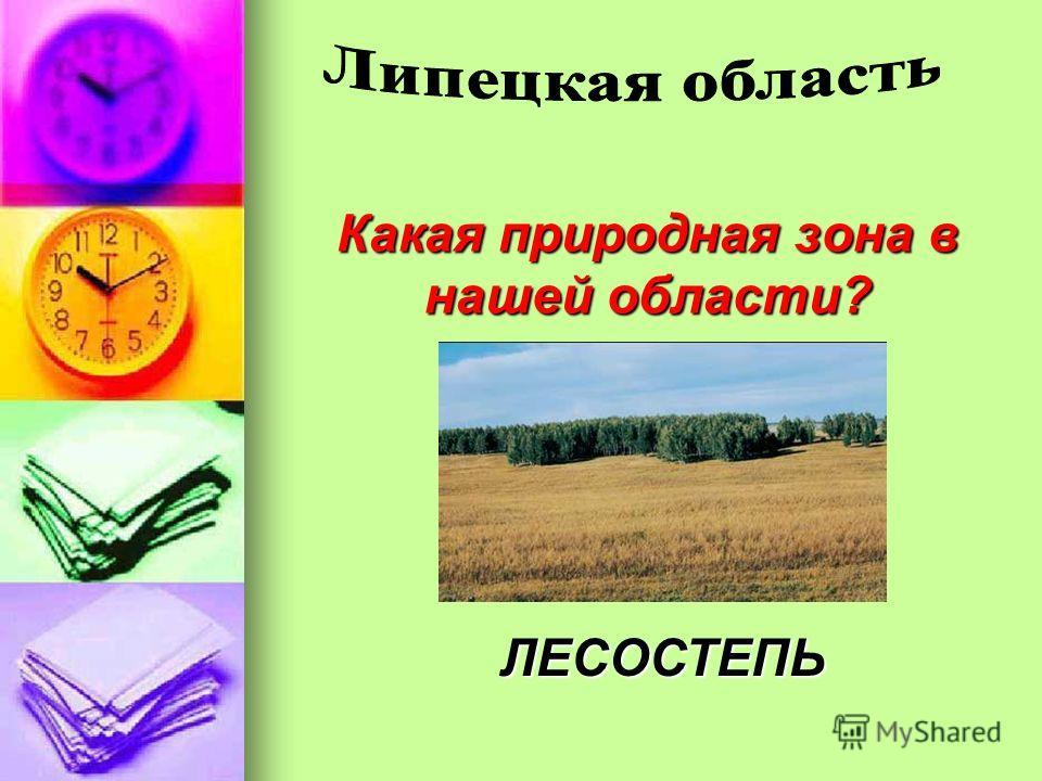 Какая природная зона в нашей области? ЛЕСОСТЕПЬ