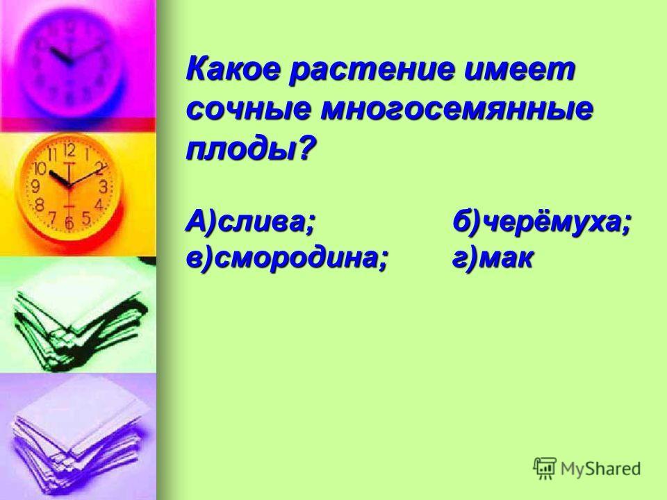 Какое растение имеет сочные многосемянные плоды? А)слива;б)черёмуха; в)смородина;г)мак