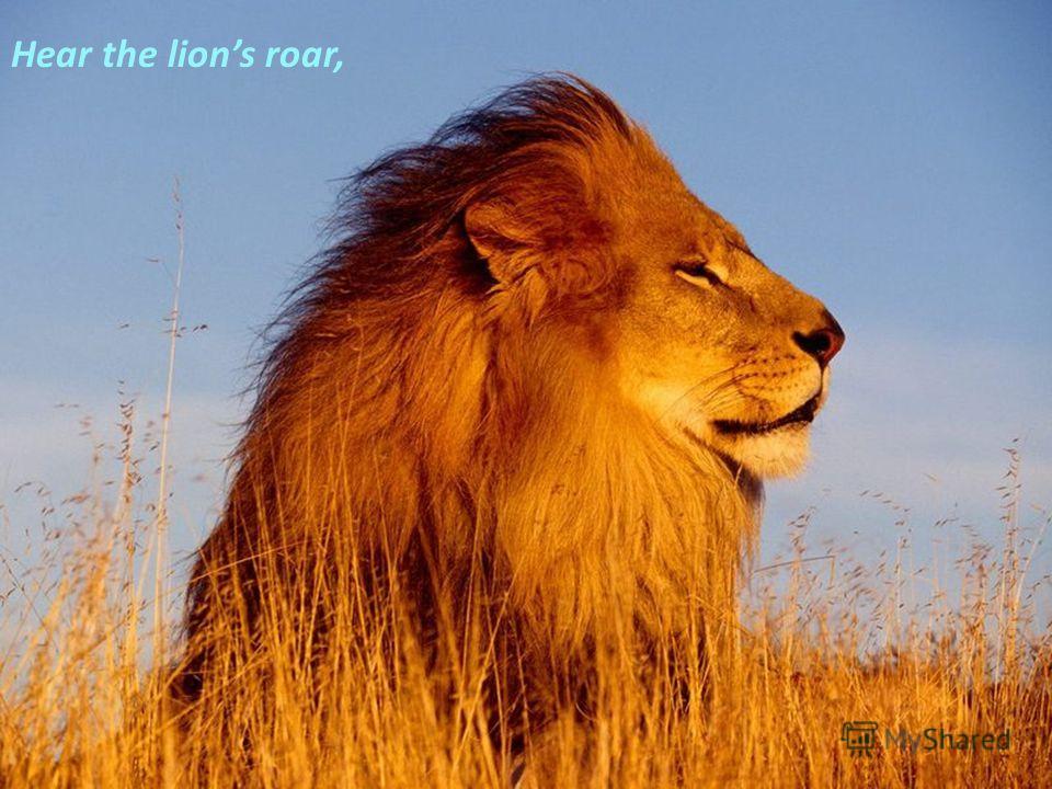 Hear the lions roar,