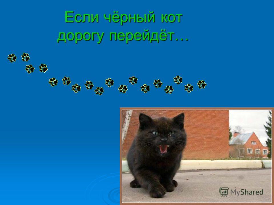 Если чёрный кот дорогу перейдёт…