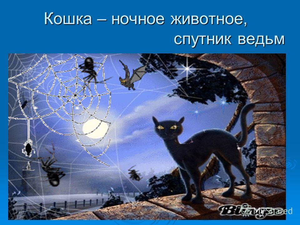 Кошка – ночное животное, спутник ведьм