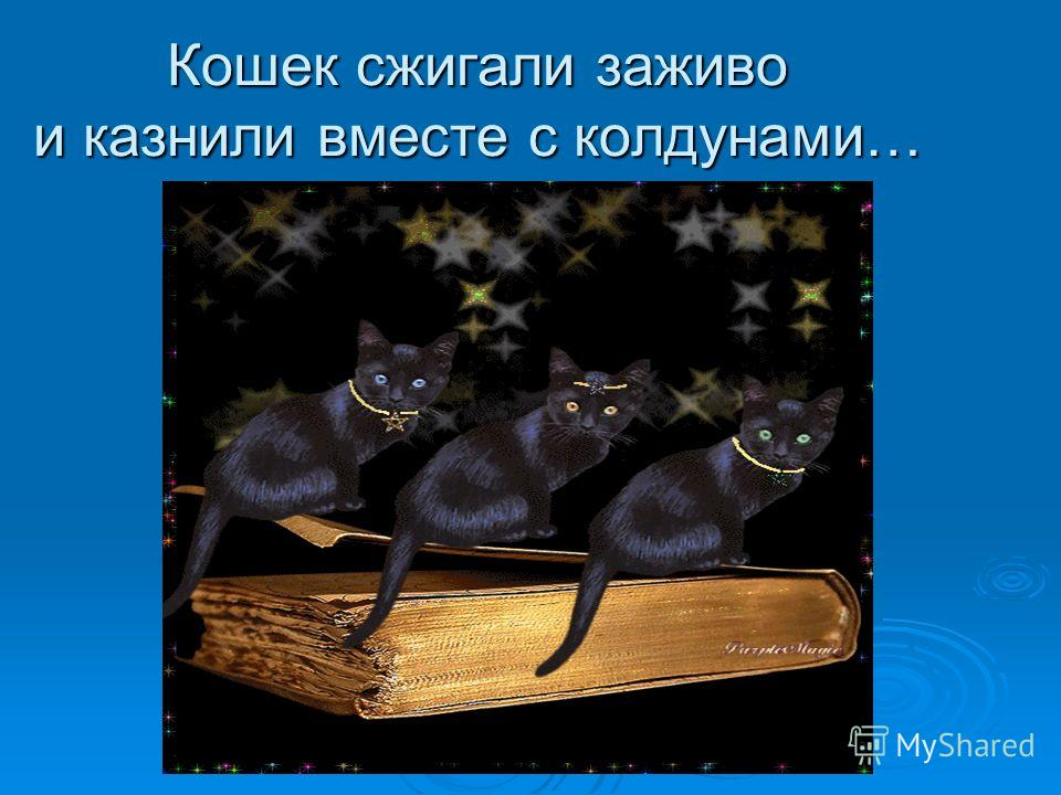 Кошек сжигали заживо и казнили вместе с колдунами…