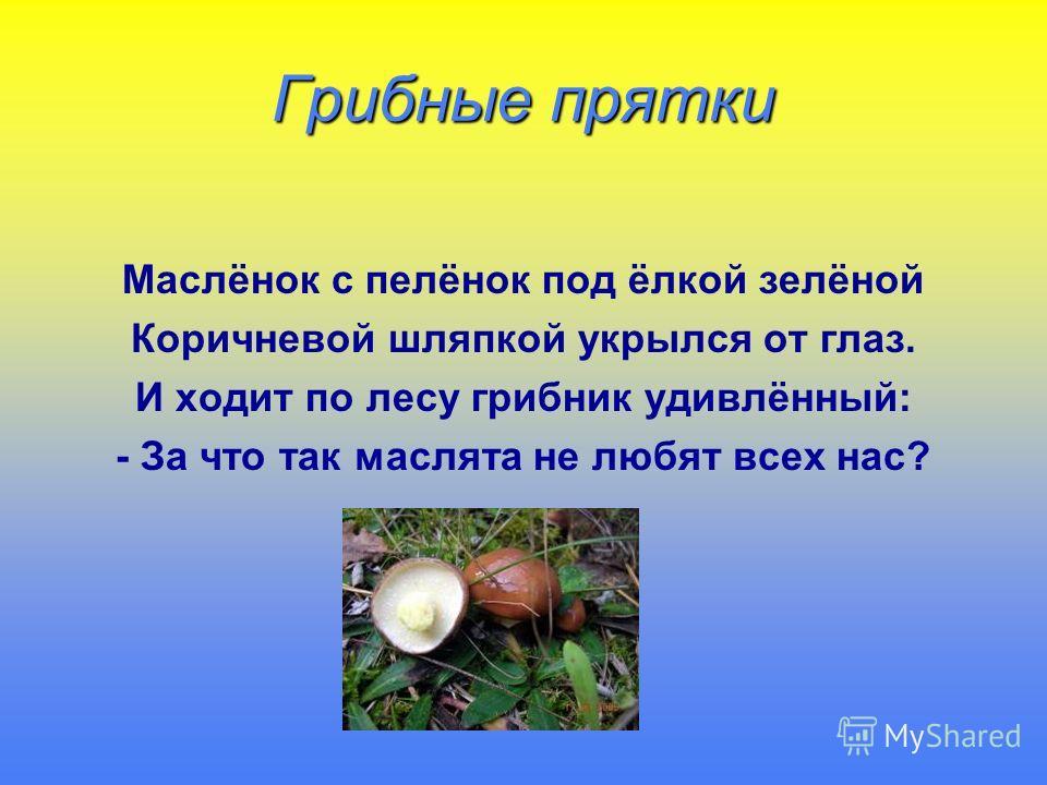 Грибные прятки Маслёнок с пелёнок под ёлкой зелёной Коричневой шляпкой укрылся от глаз. И ходит по лесу грибник удивлённый: - За что так маслята не любят всех нас?