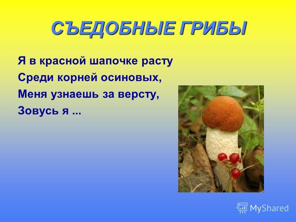 СЪЕДОБНЫЕ ГРИБЫ Я в красной шапочке расту Среди корней осиновых, Меня узнаешь за версту, Зовусь я...