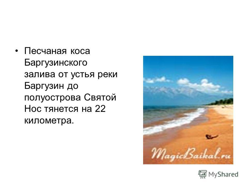 Песчаная коса Баргузинского залива от устья реки Баргузин до полуострова Святой Нос тянется на 22 километра.