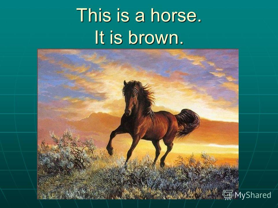 This is a horse. It is brown.