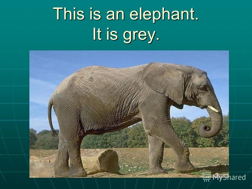 This is an elephant. It is grey.