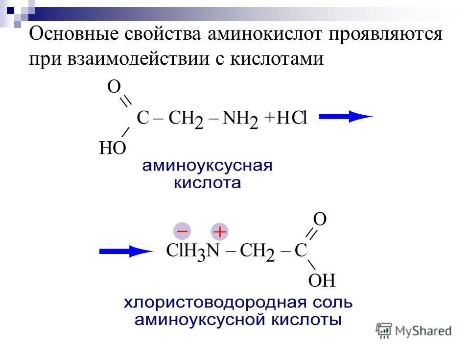 Основные свойства аминокислот проявляются при взаимодействии с кислотами