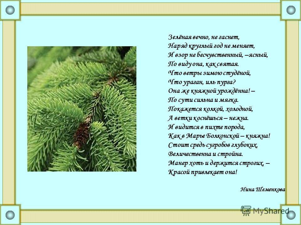 Зелёная вечно, не гаснет, Наряд круглый год не меняет, И взор не бесчувственный, –ясный, По виду она, как святая. Что ветры зимою студёной, Что ураган, иль пурга? Она же княжной урождённа! – По сути сильна и мягка. Покажется колкой, холодной, А ветки