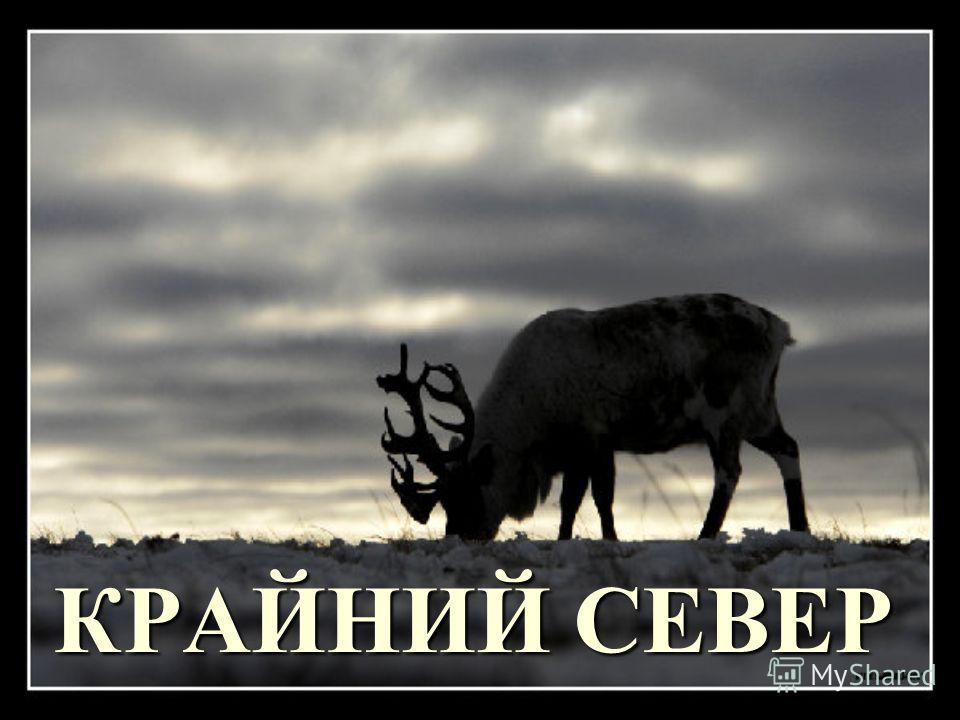 КРАЙНИЙ СЕВЕР