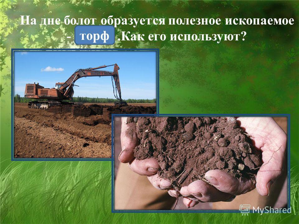 На дне болот образуется полезное ископаемое -.Как его используют? торф