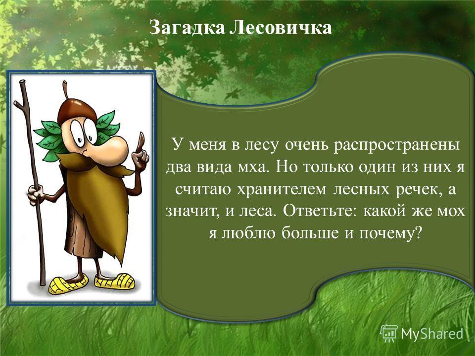 У меня в лесу очень распространены два вида мха. Но только один из них я считаю хранителем лесных речек, а значит, и леса. Ответьте: какой же мох я люблю больше и почему? Загадка Лесовичка