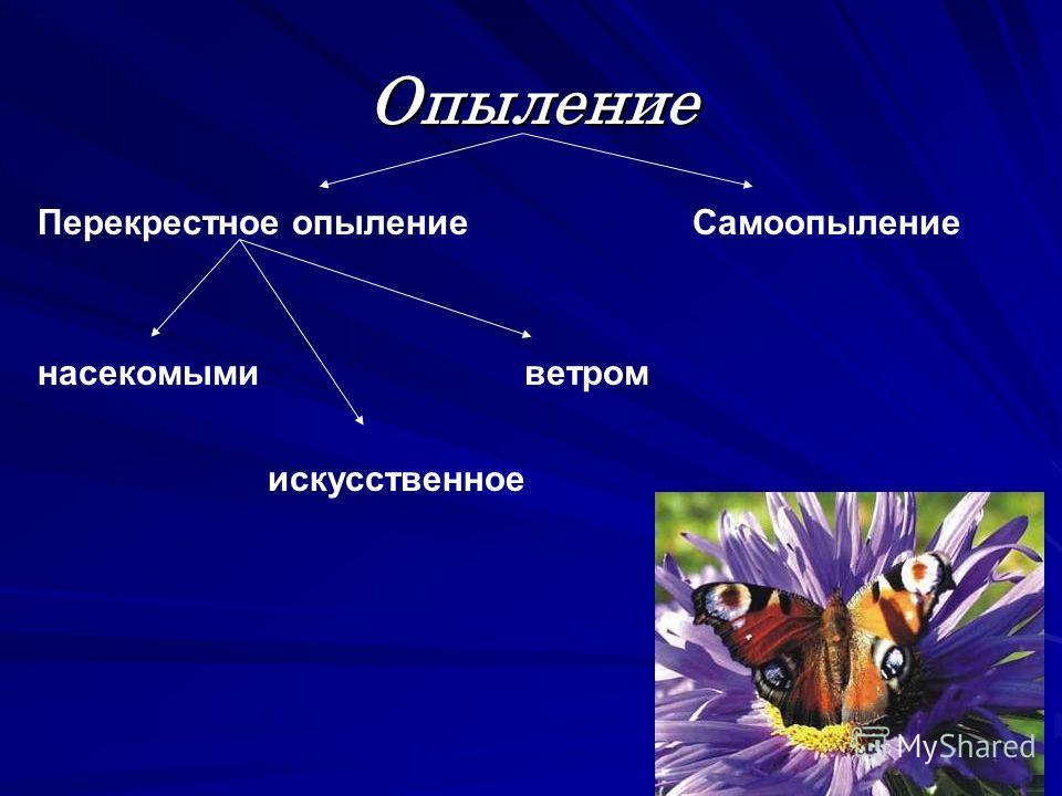 Опыление Самоопыление Перекрестное опыление ветром насекомыми искусственное