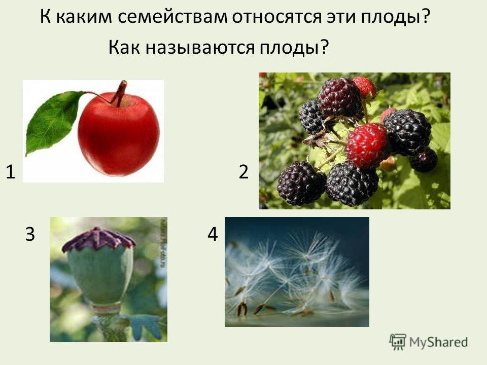 К каким семействам относятся эти плоды? Как называются плоды? 1 2 3 4
