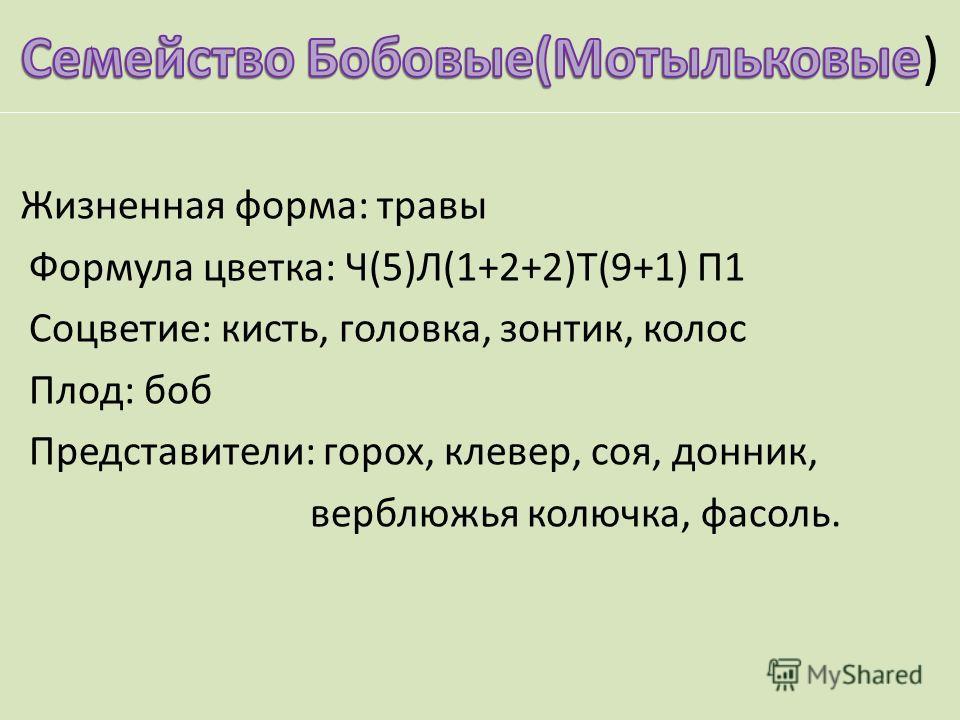 Жизненная форма: травы Формула цветка: Ч(5)Л(1+2+2)Т(9+1) П1 Соцветие: кисть, головка, зонтик, колос Плод: боб Представители: горох, клевер, соя, донник, верблюжья колючка, фасоль.
