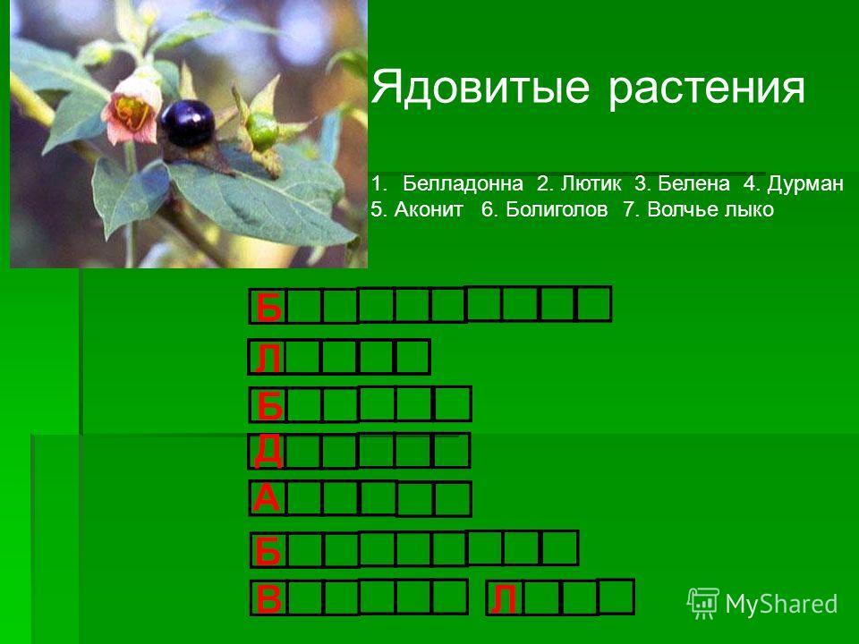 Ядовитые растения 1. Белладонна 2. Лютик 3. Белена 4. Дурман 5. Аконит 6. Болиголов 7. Волчье лыко