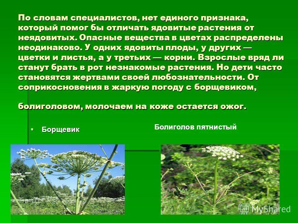 По словам специалистов, нет единого признака, который помог бы отличать ядовитые растения от неядовитых. Опасные вещества в цветах распределены неодинаково. У одних ядовиты плоды, у других цветки и листья, а у третьих корни. Взрослые вряд ли станут б