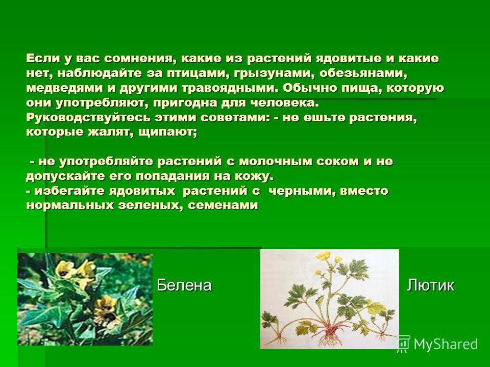 Если у вас сомнения, какие из растений ядовитые и какие нет, наблюдайте за птицами, грызунами, обезьянами, медведями и другими травоядными. Обычно пища, которую они употребляют, пригодна для человека. Руководствуйтесь этими советами: - не ешьте расте