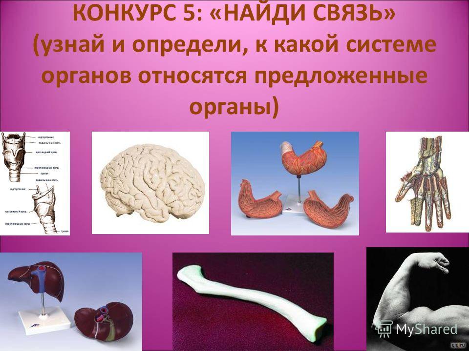 КОНКУРС 5: «НАЙДИ СВЯЗЬ» (узнай и определи, к какой системе органов относятся предложенные органы)