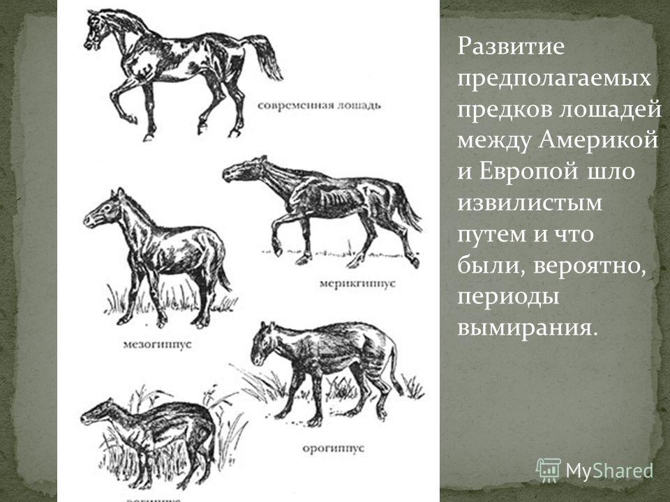 Конечности древних животных возможных предков современной лошади и самой лошади. Хорошо видно постепенное увеличение среднего пальца и ногтя на нем (будущее копыто).