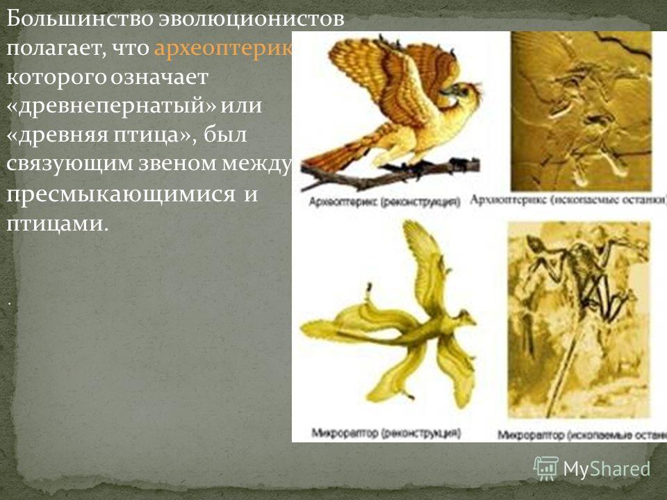 Палеонтологами были обнаружены формы организмов, сочетающие признаки более древних и более молодых групп. Такие ископаемые переходные формы служат доказательством эволюции, поскольку свидетельствуют об исторической связи разных групп организмов.