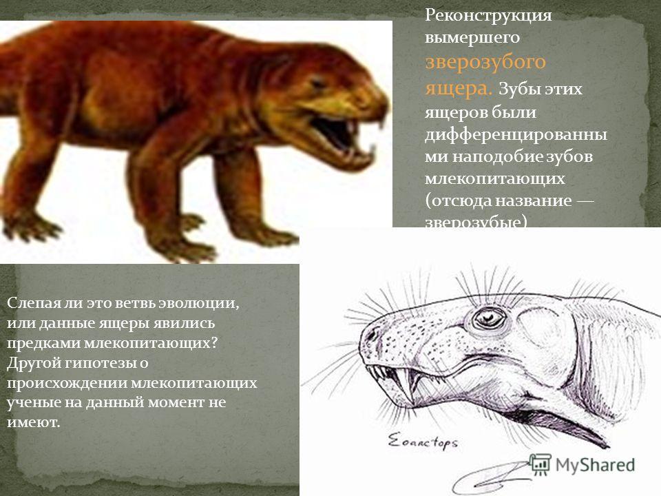 Уже имея крылья и перья, это животное сохранило, однако, и многие черты, присущие пресмыкающимся: зубы, хорошо развитые пальцы на передних лапах- крыльях, длинный хвост из множества позвонков. Археоптерикс, считающийся переходным звеном между птицами