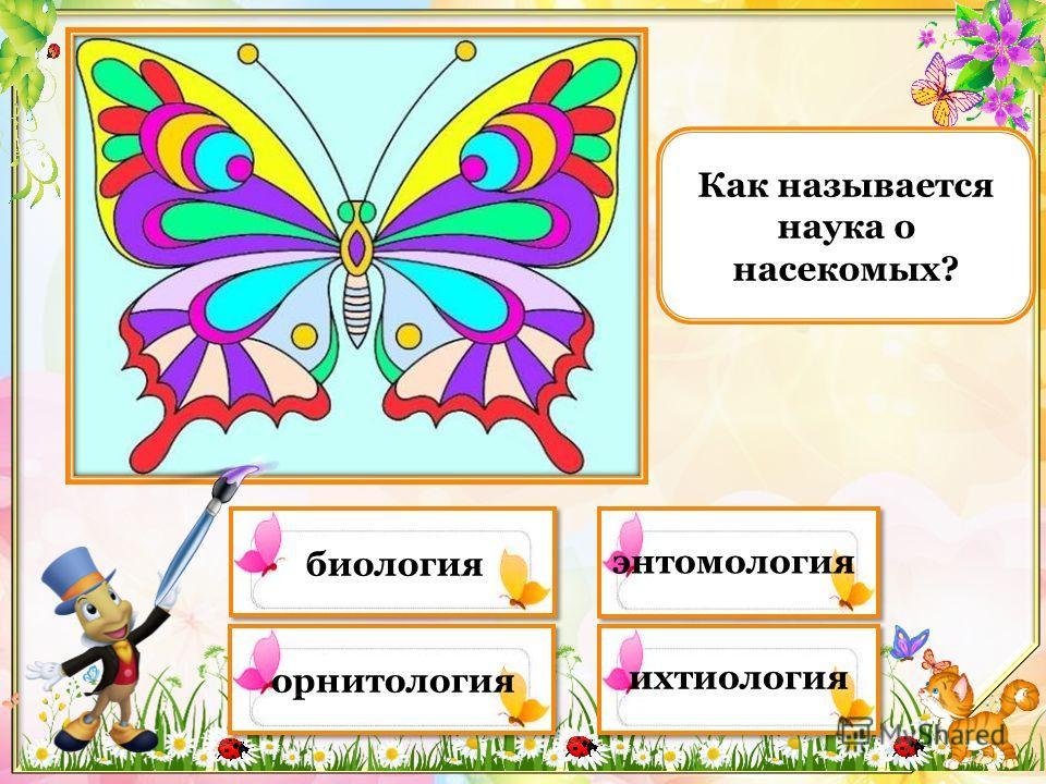 Какая из этих бабочек занесена в Красную книгу?