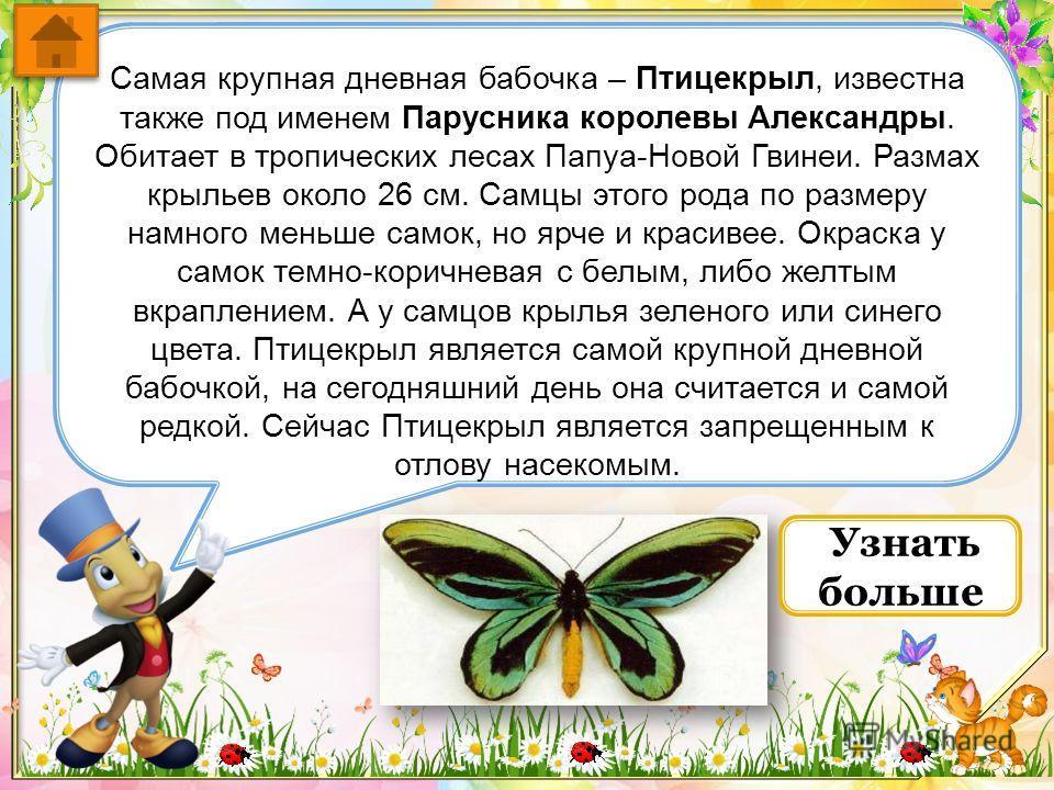 Самая крупная ночная бабочка носит название Князь Тьмы и считается самой большой бабочкой в мире, ещё её называют Павлиноглазка Атлас. Один из её подвидов - бабочка Император считается самой крупной, ее крылья в размахе достигают 32 см. Гусеницы бабо