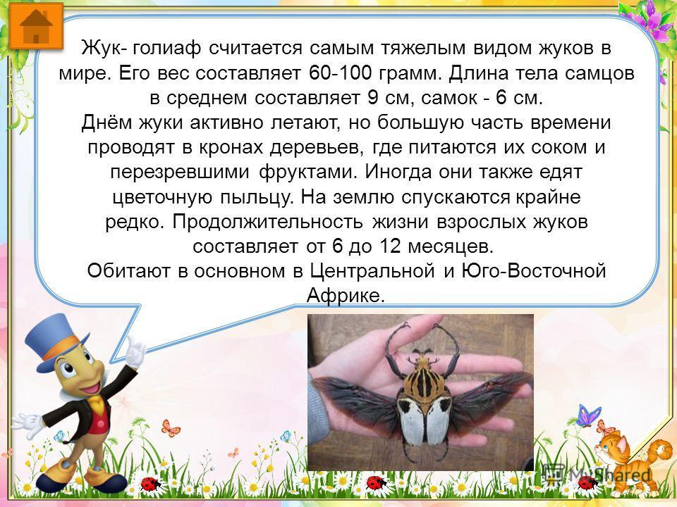 Самая крупная дневная бабочка – Птицекрыл, известна также под именем Парусника королевы Александры. Обитает в тропических лесах Папуа-Новой Гвинеи. Размах крыльев около 26 см. Самцы этого рода по размеру намного меньше самок, но ярче и красивее. Окра