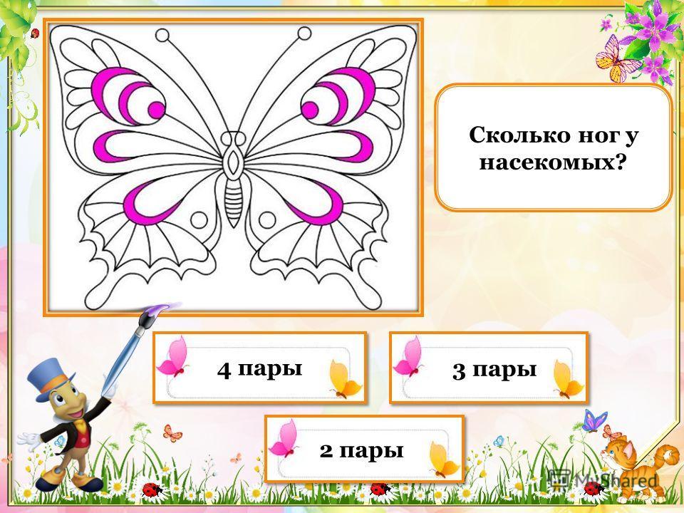 Что общего у всех насекомых? насечки на брюшке они летают они все маленькие они все вредители