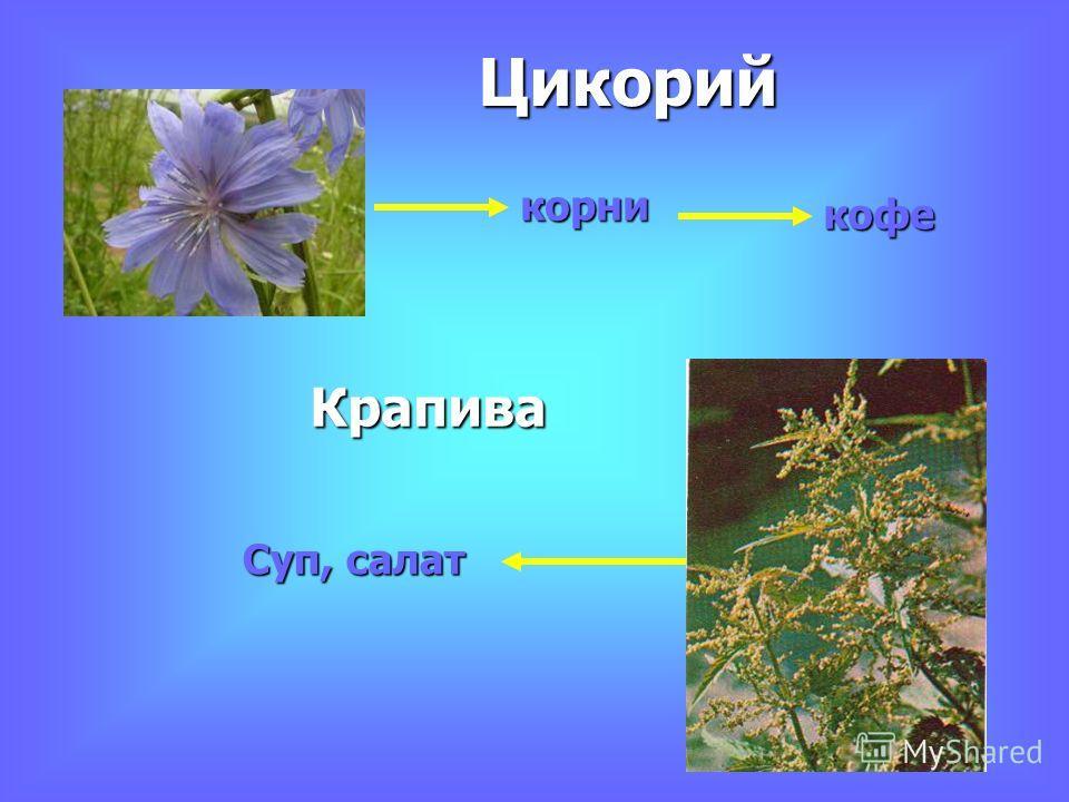 корни кофе Цикорий Крапива Суп, салат