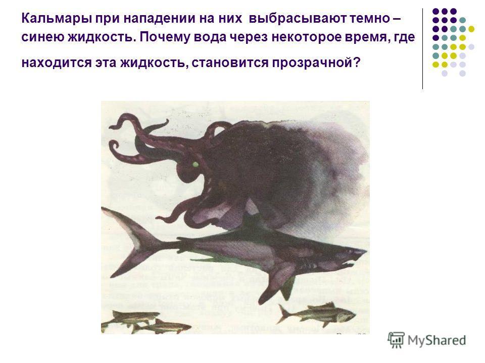 Кальмары при нападении на них выбрасывают темно – синею жидкость. Почему вода через некоторое время, где находится эта жидкость, становится прозрачной?