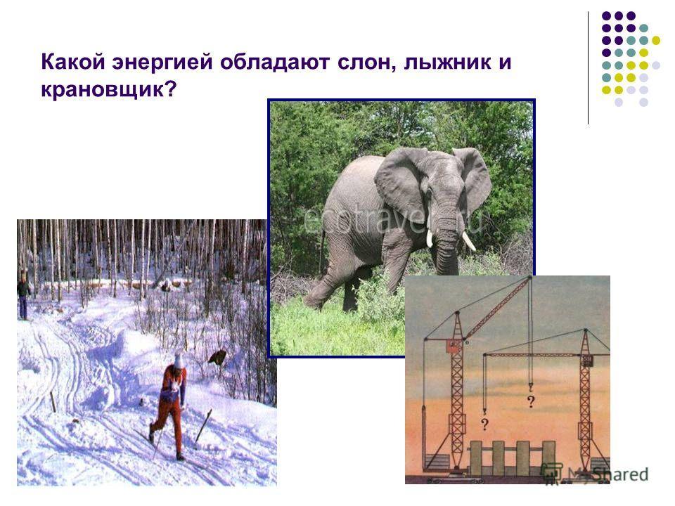 Какой энергией обладают слон, лыжник и крановщик?