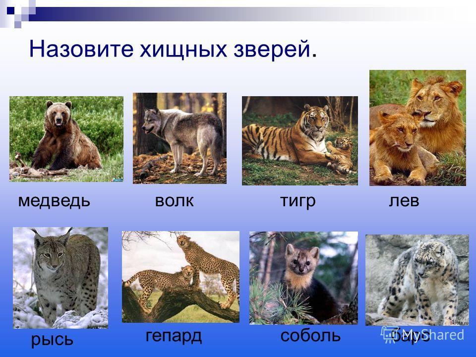 Назовите хищных зверей. медведь волк тигр рысь лев гепардсобольбарс