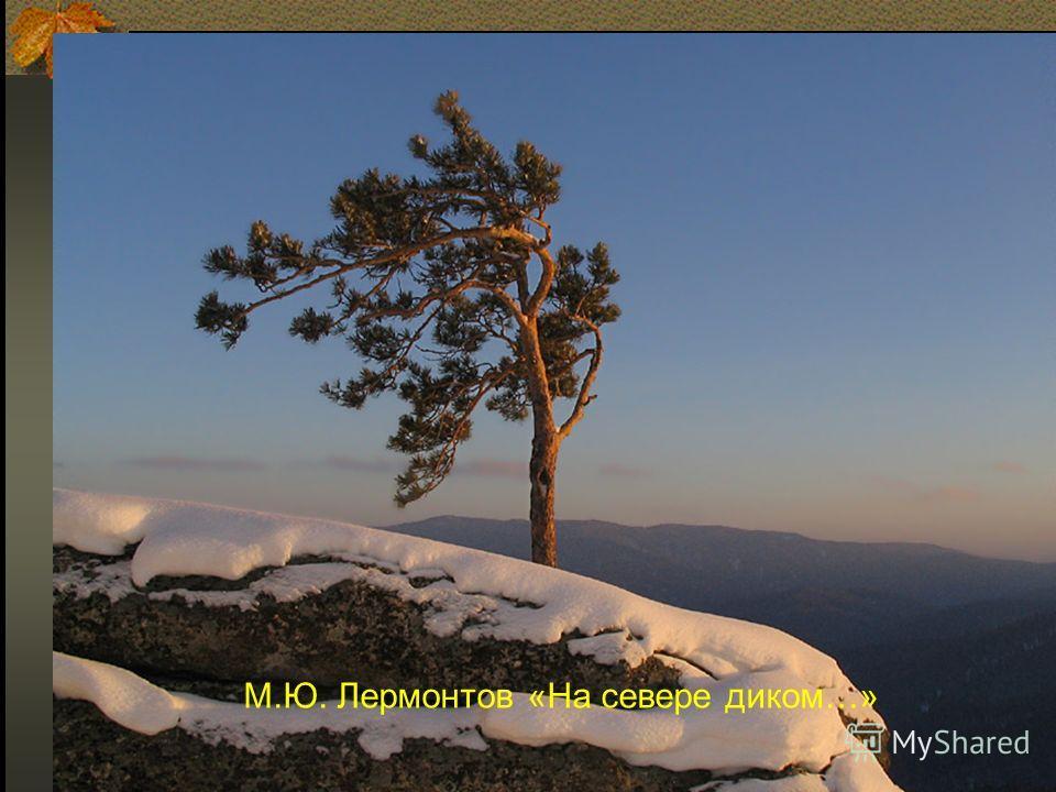 М.Ю. Лермонтов «На севере диком…»