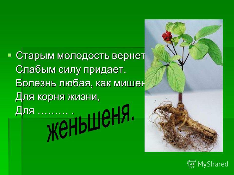 Старым молодость вернет, Старым молодость вернет, Слабым силу придает. Слабым силу придает. Болезнь любая, как мишень, Болезнь любая, как мишень, Для корня жизни, Для корня жизни, Для ………. Для ……….
