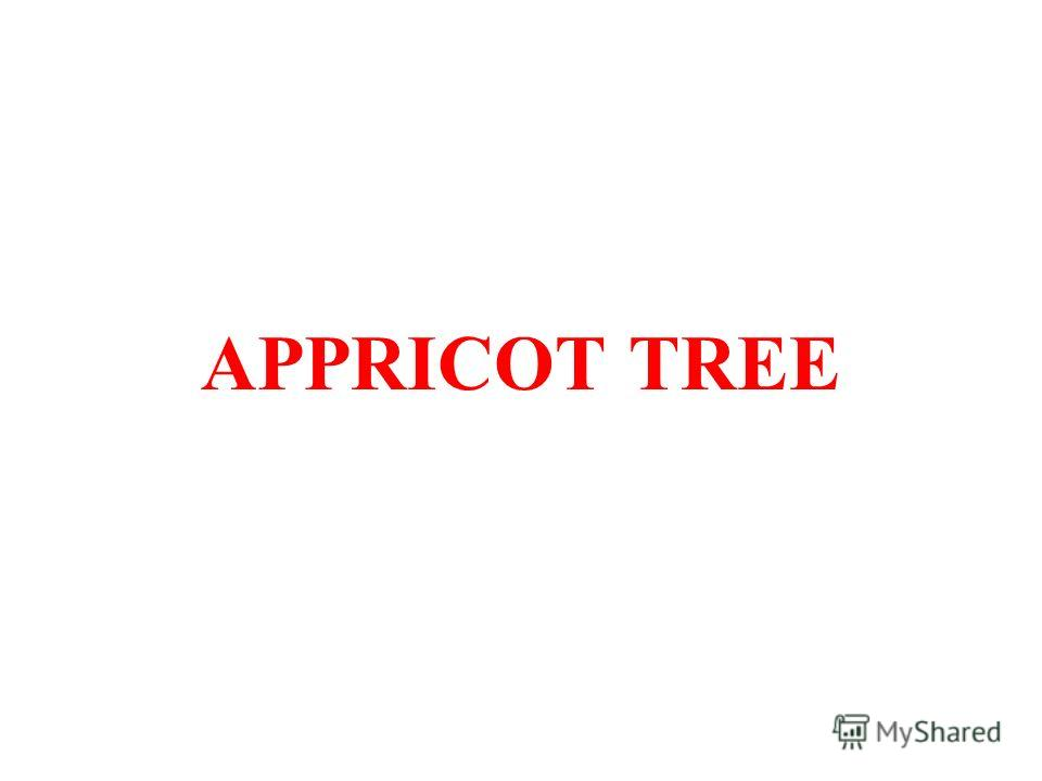 APPRICOT TREE