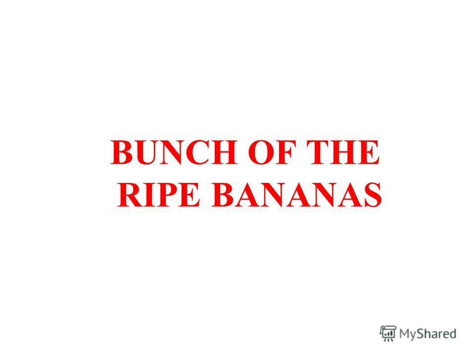 BUNCH OF THE RIPE BANANAS